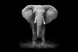 الفيل في الظلام
